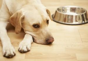 Egészséges étrend kutyáknak