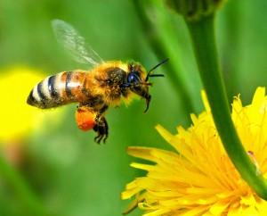 Értékes mézfajta az erdei virágméz